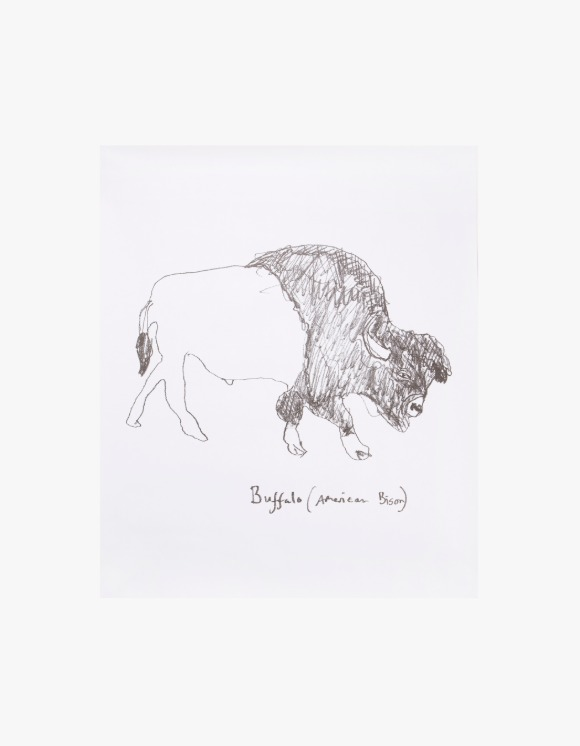Dashwood Buffalo / American Bison by Hugo Guinness - Poster | HEIGHTS. | 하이츠 온라인 스토어