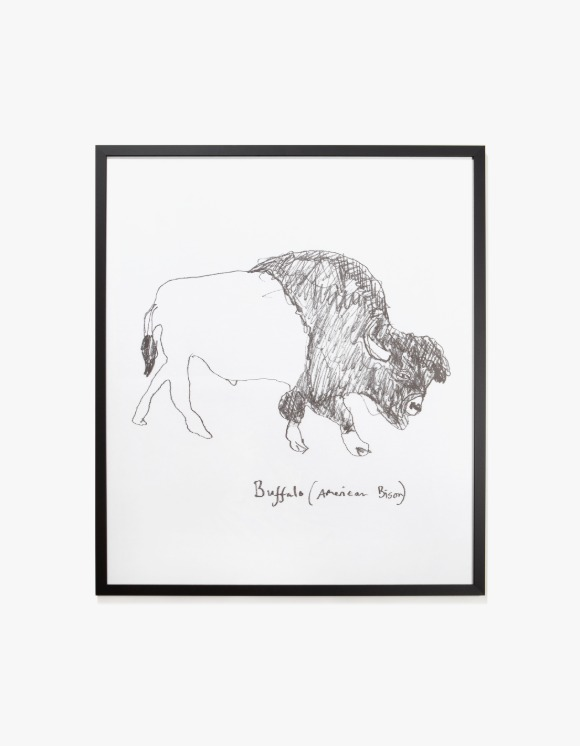 Dashwood Buffalo / American Bison by Hugo Guinness - Frame | HEIGHTS. | 하이츠 온라인 스토어